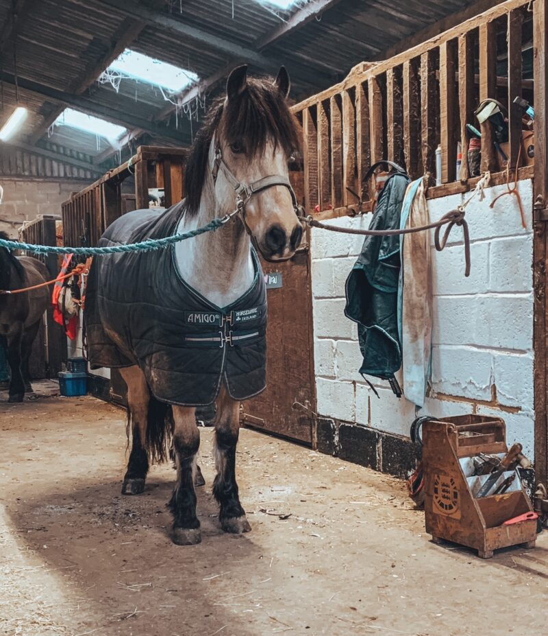 Horse tied up for the farrier