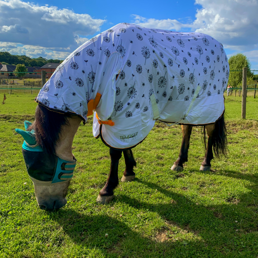 Pony wearing a fly rug and fly mask in the UK