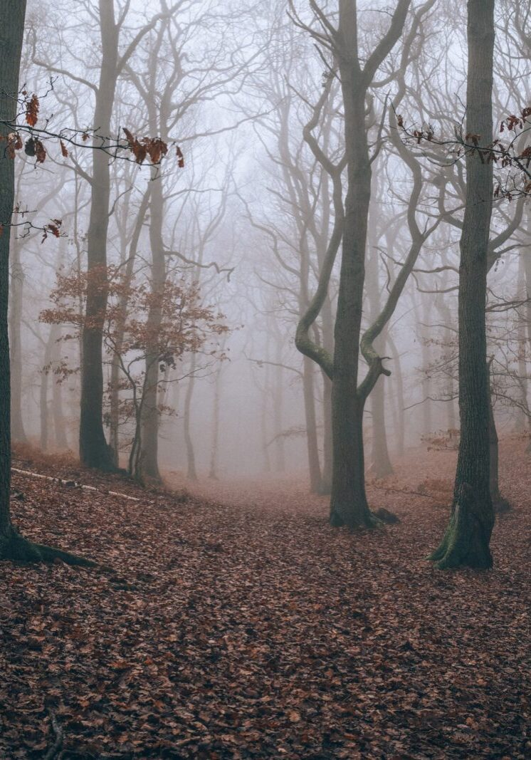 A foggy day at Rushmere Country Park