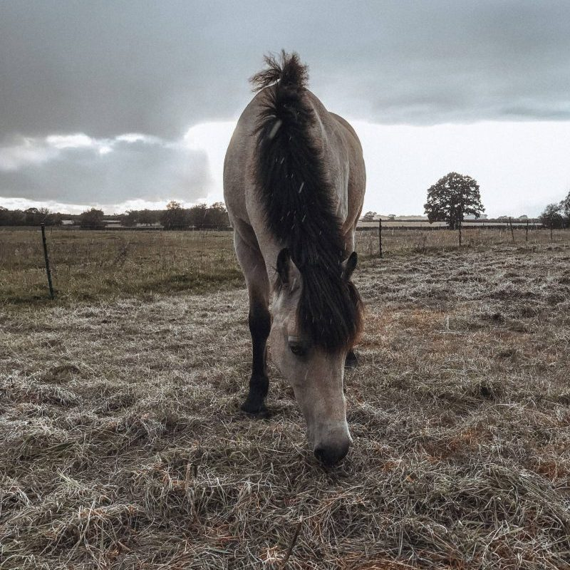 A horse outside in the rain