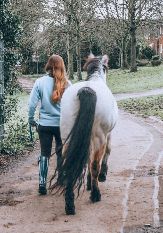 Horse and owner walking away in hand