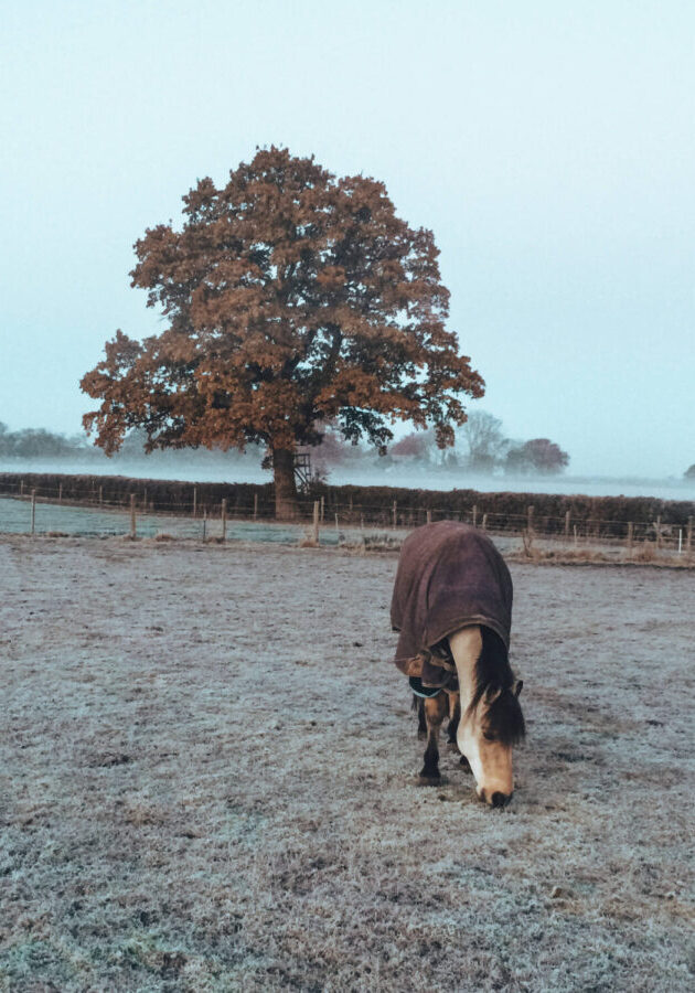 Horse in rug out in a frosty field