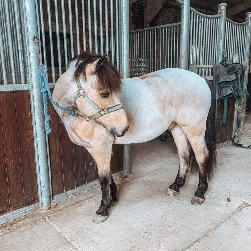 Horse stands inside a stable block