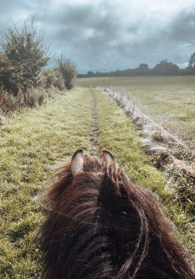 View of stormy sky through pony's ears