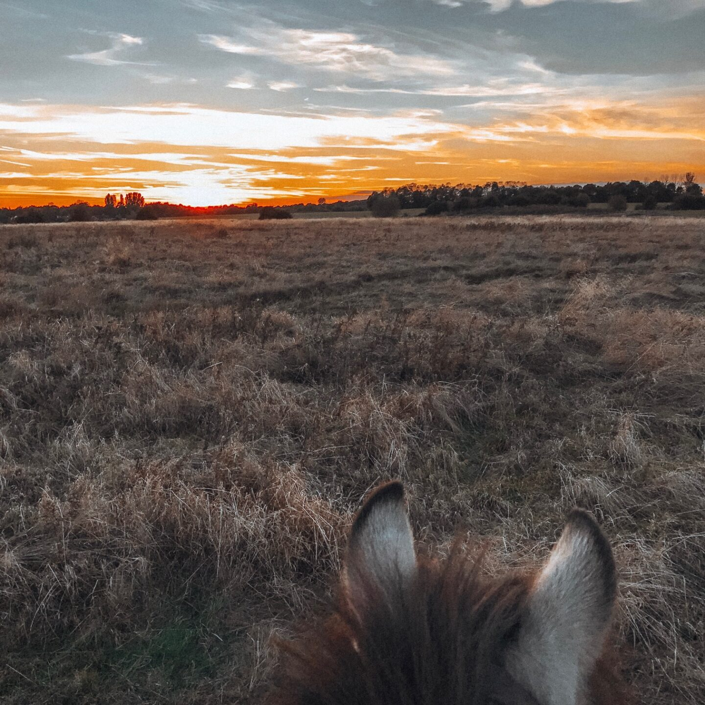 View of the sunset through a horses ears