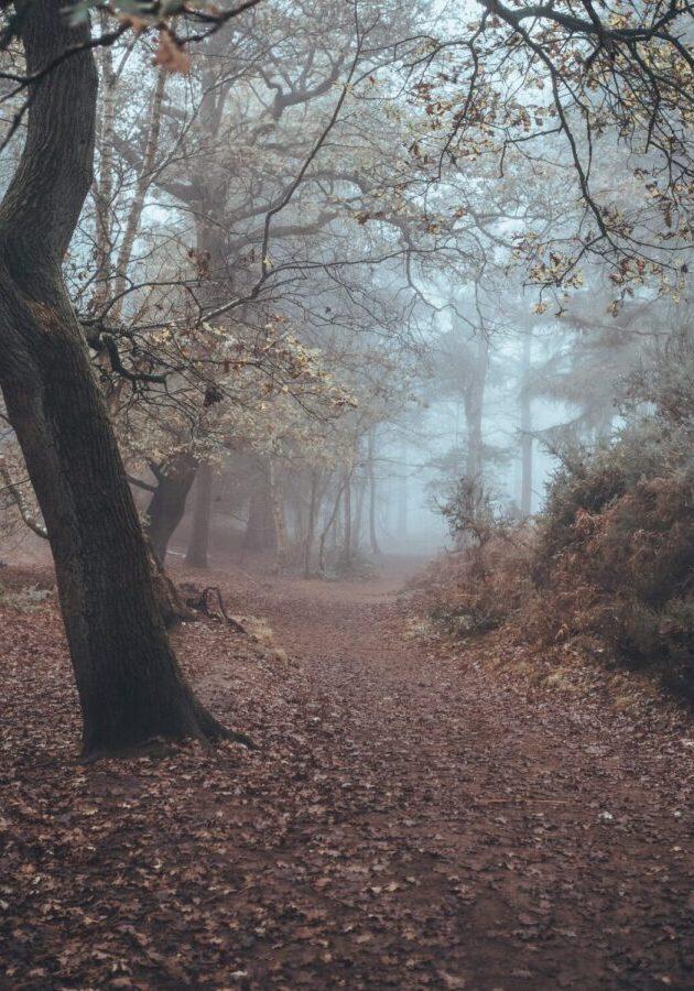 Woodland walk Rushmere